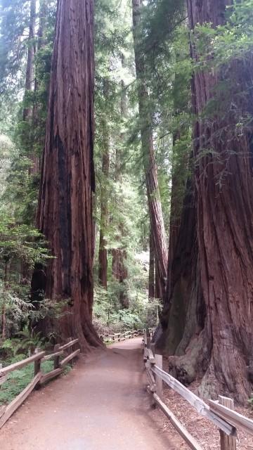 Muir Woods (2)